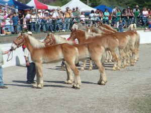 Mule_Day_in_Columbia,_TN